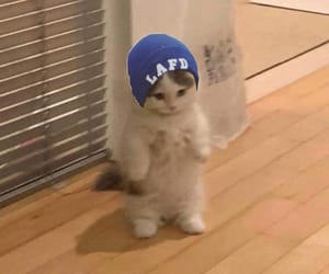 beanie, cat, and discover image