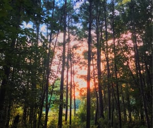 nature, trees, and my photo image