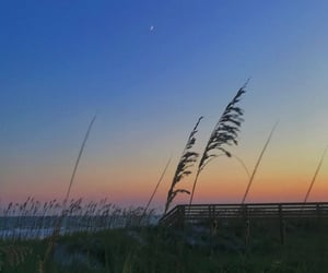 beach, nature, and moon image