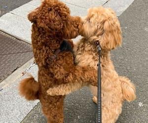 animal, dog, and kiss image
