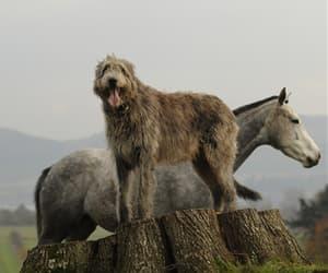 animal, farm, and horse image