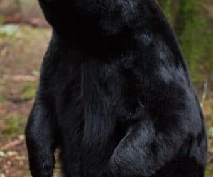 animal, bear, and woods image
