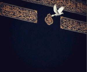 allah, amazing, and dove image