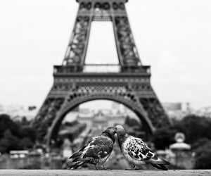 paris, love, and bird image