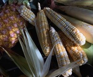 autumn, fall, and maize image