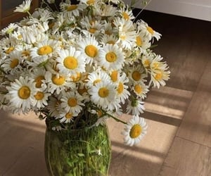 beautiful, flowers, and daisies image