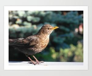 bird, foto, and birds image