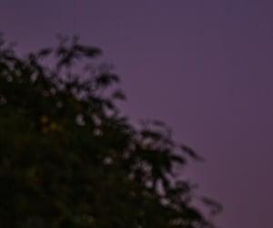 moon, bosque, and luna llena image