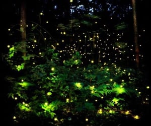 firefly, glowing, and photography image