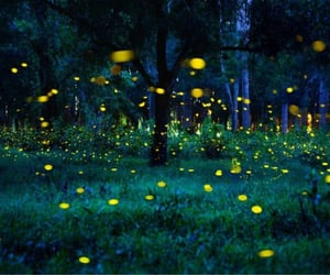 childhood, firefly, and glowing image
