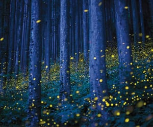 childhood, fireflies, and summer night image