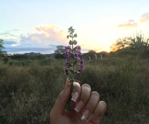 flowers, inspiration, and nails image