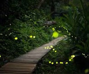 fireflies, summer night, and photography image