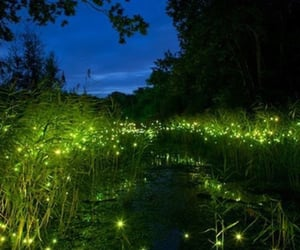 fireflies, glowing, and summer nights image