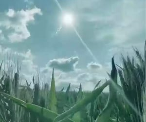 blue sky, grass, and sunshine image