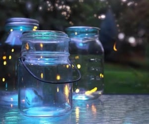 firefly, glowing, and summer nights image
