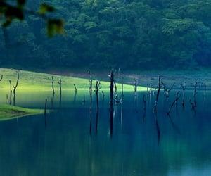 kerala, resorts in thekkady, and idukki image