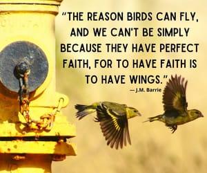 birds, faith, and fly image