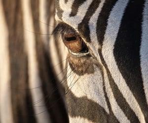 animal, eyes, and photography image