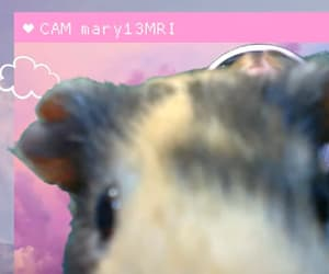wholesome, guinea pig, and harvey dent image