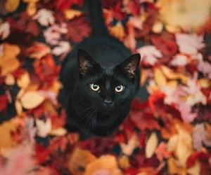 cat, autumn, and animal image