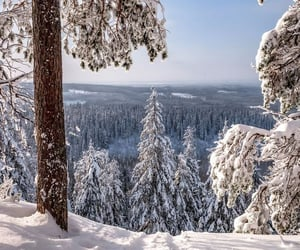 Winter aesthetic ❄ Winter wonderland ✨ 🎄☃️🕯❄🌨
