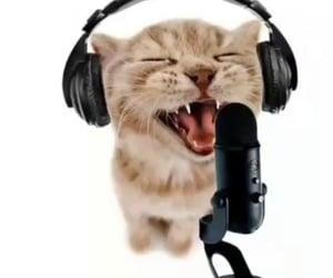 cat, meme, and scream image