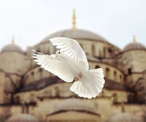 bird, mosque, and istanbul image