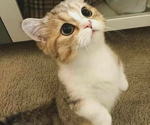adorable, awesome, and aww image