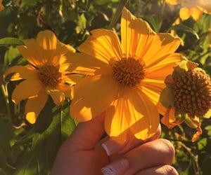 flowers, inspiration, and la image