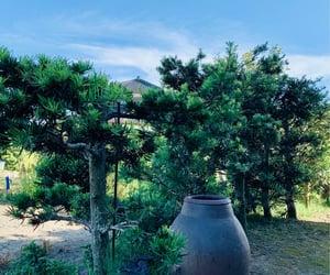 庭, 壺, and 和庭 image