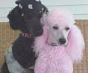 black dog, dogs, and polka dot image