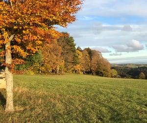 autumn, sunshine, and nofilter image