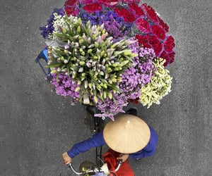flowers, photography, and bicycle image