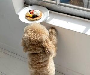 animal, dog, and food image