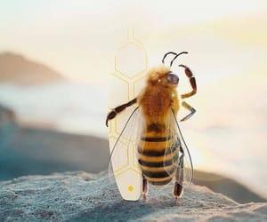 bee, photo manipulation, and photoshopped image