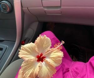 bloom, flourish, and flowers image