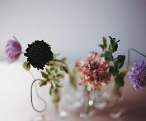 beige, black, and flowers image