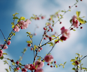 50mm, blossom, and blue image