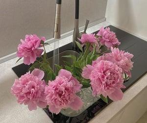 fleur, flower, and pink image