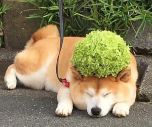 aesthetic, green, and dog image