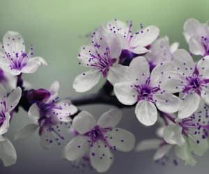bloom, petals, and bright image