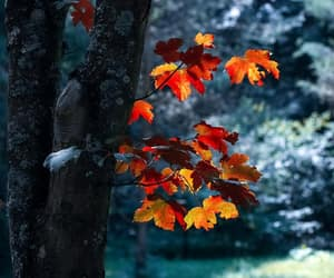 blur, nature, and fall image
