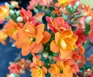 autoral, flowers, and morning image