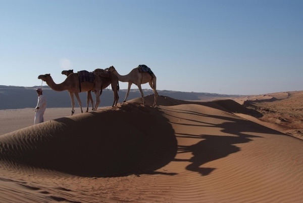 camels, culture, and desert image