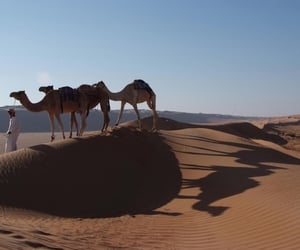 camels, inspiration, and nature image