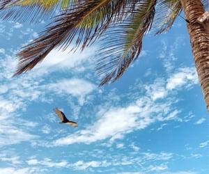 beach, liberdade, and solidao image