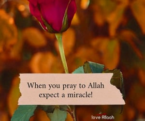 miracle, blessings, and alhamdulillah image