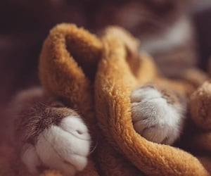 blanket, cat, and pet image