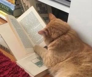 books, manifest, and pet image
